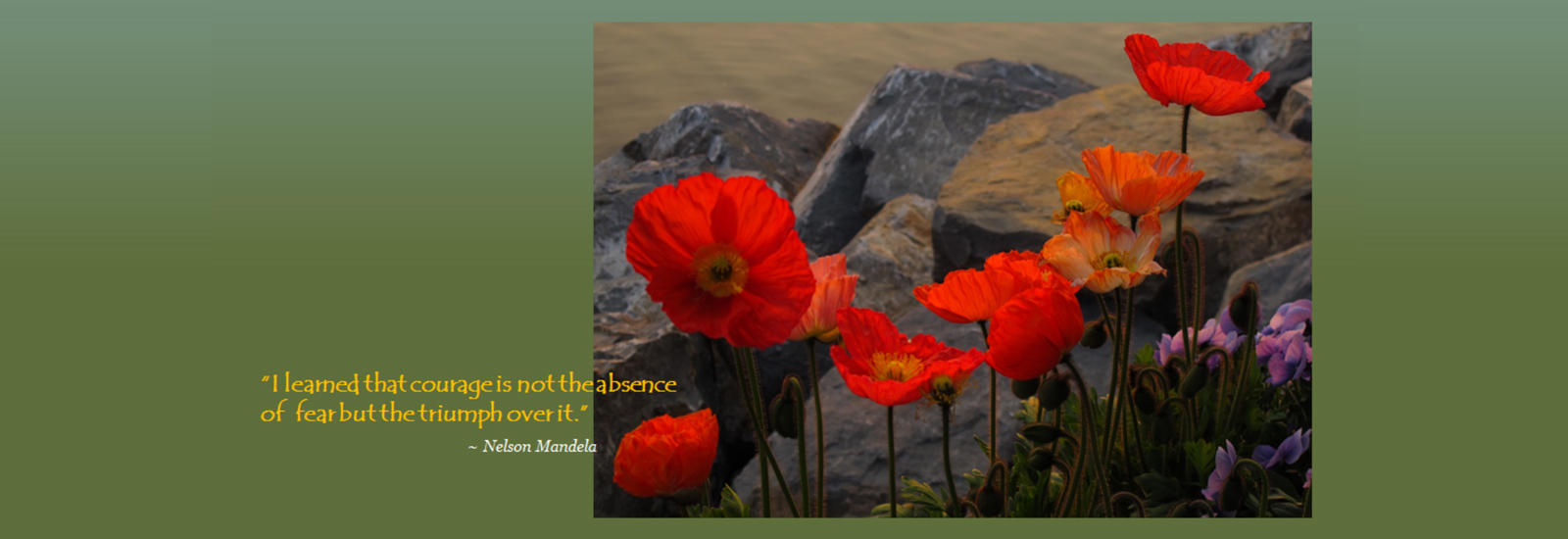 english_slide_1-poppies-and-rocks