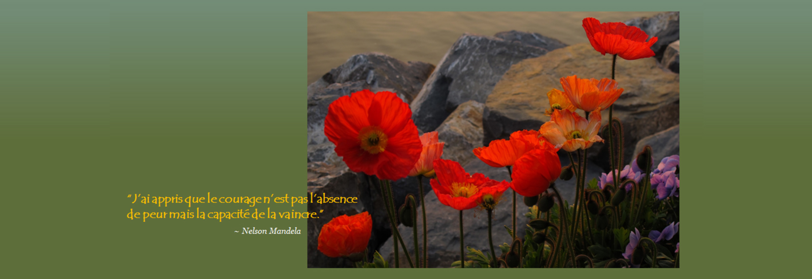 french-slide-1-poppies-and-rocks
